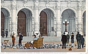 Group in  Wicker Rolling Chair Feeding Pigeons p30629 1915 (Image1)