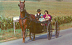 Amish Family in Horse and Buggy p30703 (Image1)