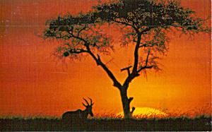 Beautiful Sunset with Antelope WWF Postcard p30769 (Image1)
