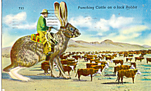 Punching Cattle On A Jack Rabbit Texas P30929