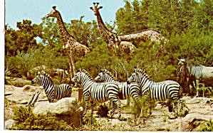 African Veldt Disneyland s Adventureland p30932 (Image1)