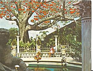 Clearwater Florida Kapok Tree Inn p30998 (Image1)