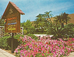 Tampa Florida, Busch Gardens Flowers and Palms (Image1)