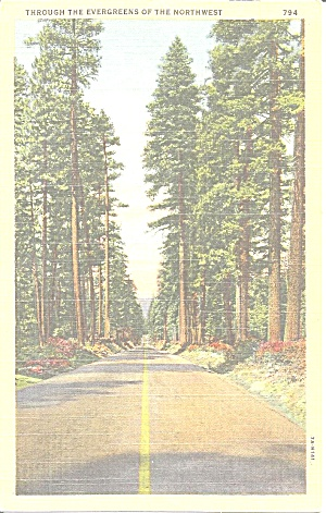 Evergreen Trees Along A Northwest Highway Postcard P31073