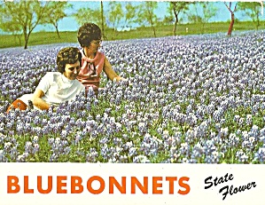 Texas State Flower Bluebonnets p31077 (Image1)