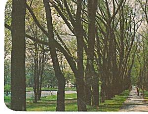 The Willow Path Colgate University Hamilton New York p31086 (Image1)