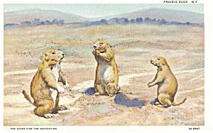 Prairie Dogs Postcard (Image1)