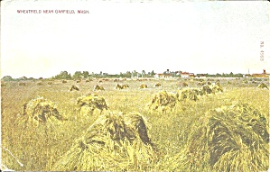 Wheat Field in Garfield, Washington 1910 (Image1)