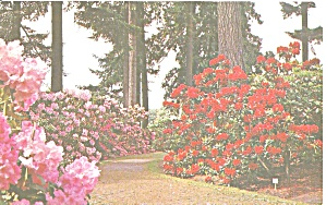 Rhododenendron Test Garden, Portland.Oregon (Image1)