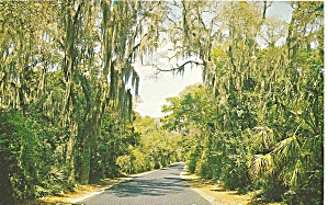 Spanish Moss Covered Trees Over Highway