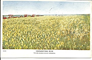 Harvesting Rice Texas 1910 (Image1)