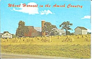 Wheat Harvest, Amish Farm Postcard p31373 (Image1)