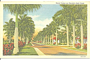 Royal Palms On Florida S Gulf Coast
