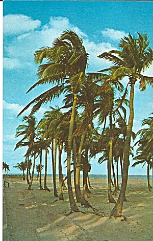 Palms And Beach Florida P31598
