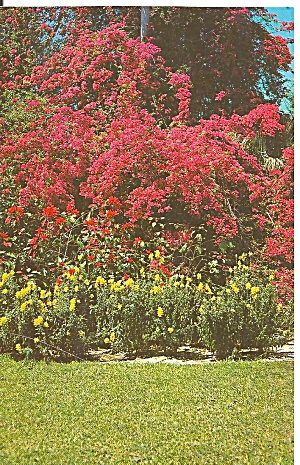 St Petersburg Florida Sunken Gardens p31616 (Image1)