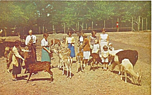 Pocono Wild Animals Feeding Grounds p31646 (Image1)