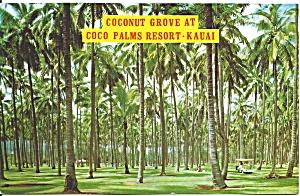 Kauai Hawaii Coconut Grove at Coco Palms Resort p31697 (Image1)
