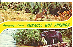 Hot Springs Arkansas Deer And Black Bear P31699