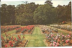 Orangeburg South Carolina Edisto Gardens p31700 (Image1)