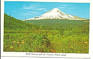Mt Hood,Oregon,Wild Flowers and Mount Hood (Image1)