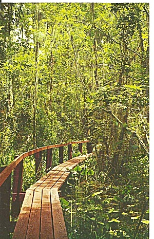 Highland Hammock State Park Florida p31709 Catwalk (Image1)