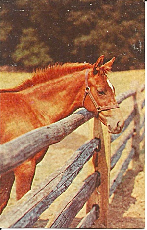 Horse at Fence Fenced In (Image1)