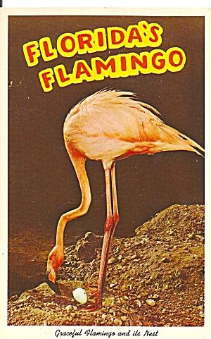 Beautiful Pink Flamingo on the Nest p31821 (Image1)
