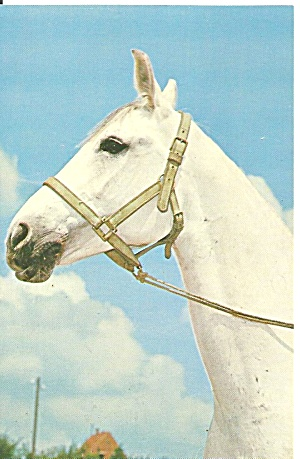 White Horse Feuertaufe Postcard p31833 (Image1)