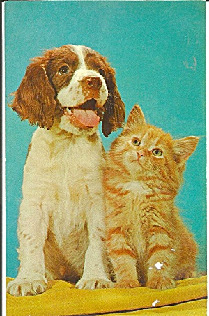 Pals Cute Tabby Cat And Dog Postcard P31835