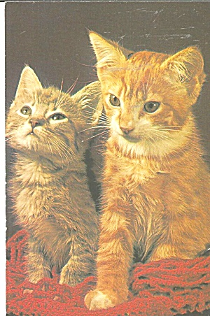 Pair Of Tabby Cats Postcard P31836