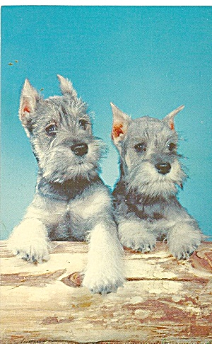Pair Of Dogs Postcard P31867