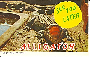 Florida Alligator With Mouth Open Postcard P31882