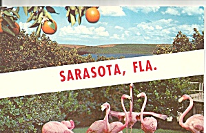 Flamingos And Oranges At Sarasota, Florida