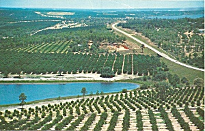 Orange Groves from the Citrus Tower Florida p31911 (Image1)