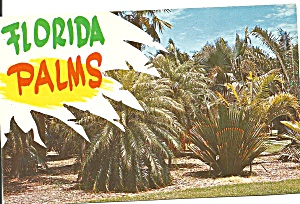 Florida Palms Postcard p31921 (Image1)