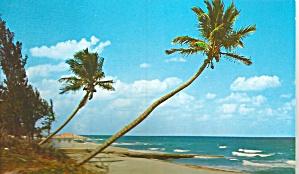 Florida Coast Whispering Palms p31931 (Image1)