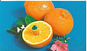 Florida Tangelos Postcard p31952 (Image1)