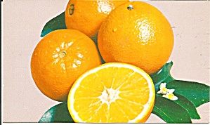 Florida Navel Oranges Postcard p31953 (Image1)