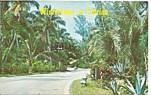Florida View of a Tropical Road p31954 (Image1)