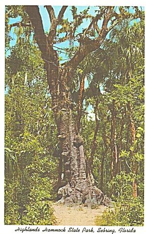 Sebring Florida Highlands Hammock State Park p31978 (Image1)