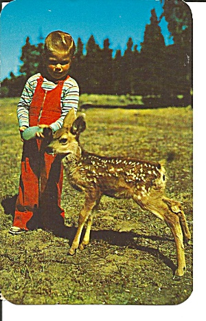 Young Boy with a Mule Deer ostcard p32038 (Image1)