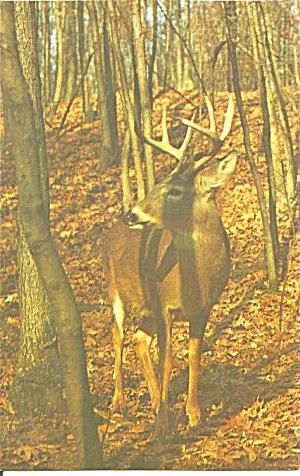 S Stately Buck Modern Postcard (Image1)