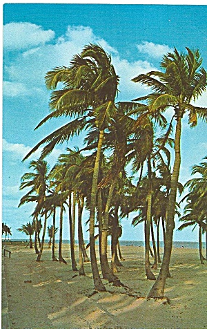 Florida Palms And Beach Scene P32067