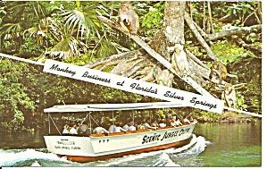 Silver Springs Florida Monkeys in Trees p32075 (Image1)