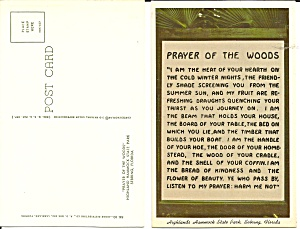 Hammock State Park Florida Prayer Of Woods P32096