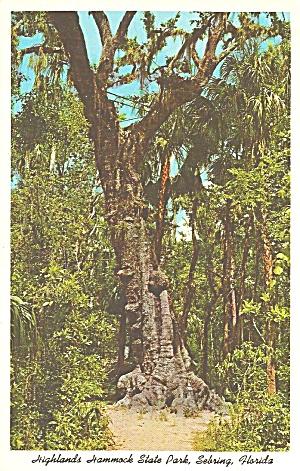 Hammock State Park Florida Mystery Tree p32098 (Image1)
