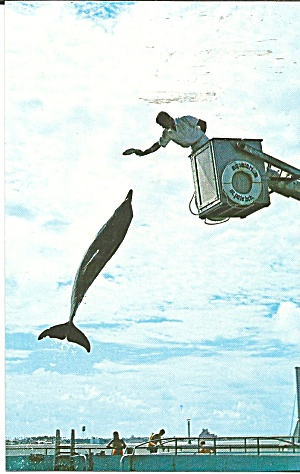 St Petersburg Beach Florida Aquatarium Porpoise Leaping p32107 (Image1)