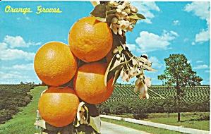 Florida Oranges on a Highway Scene p32121 (Image1)