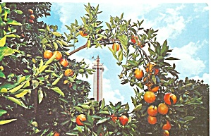 Clermont FL Citrus Tower Framed in Orange Tree Branch p32122 (Image1)
