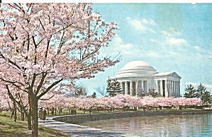 Washington Dc Jefferson Memorial Cherry Blossom Time P32140